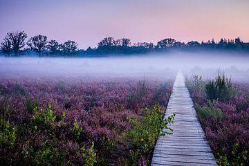 Brouillard matinal Galderse Heide Breda sur Jean-Paul Wagemakers