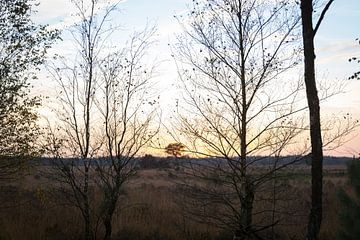 Untergehende Sonne Strabrechtse Heide mit Silhouettenbäumen von Ger Beekes