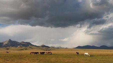 Paarden aan de oever van Song Kol