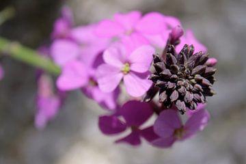 Pink flower von geen poeha