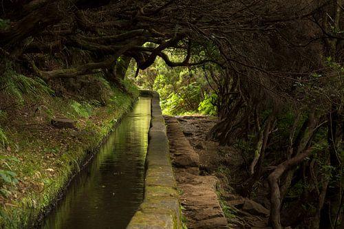 Levada wandelingen over het bloemeneiland Madeira van