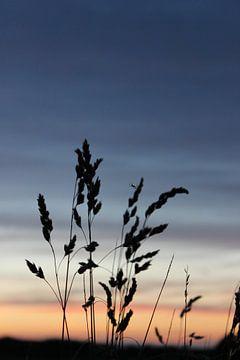 Getreide am Abend von Marloes Sinnema