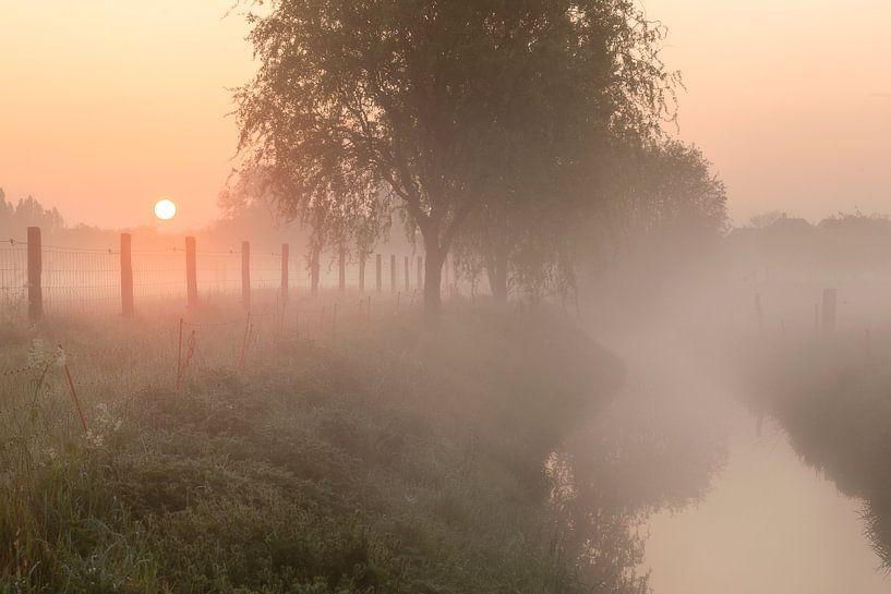 een mistige ochtend langs de beek in Menen van Krist Hooghe