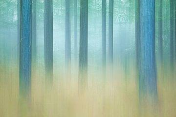 Abstracte weergave mistig dennenbos van Vincent de Jong