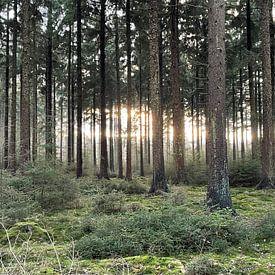 Mysterieus licht in het bos van René Boverhuis