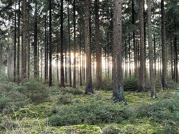 Mysterieus licht in het bos