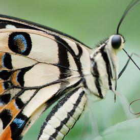 Tropisch vlinderfestival sur Chris Heijmans