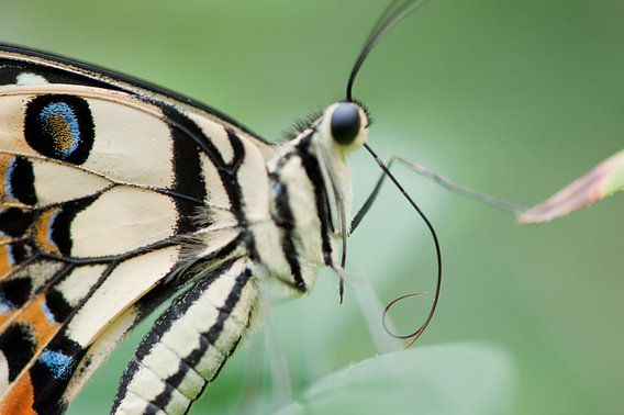 Tropisch vlinderfestival