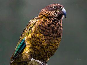 Kea - berg papegaai van