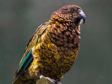 Kea - berg papegaai van Max Steinwald