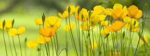 Gele klaprozen, een Palet in Geel van