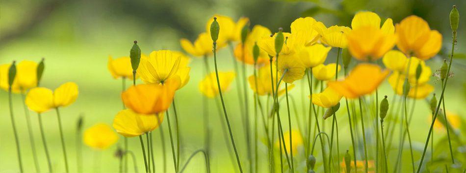 Gele klaprozen, een Palet in Geel van Frans van der Gaag