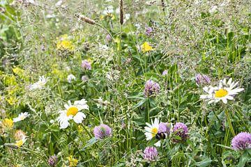 Blumenwiese von Annie Postma