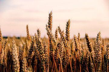 Getreidefeld von Marleen Kuijpers