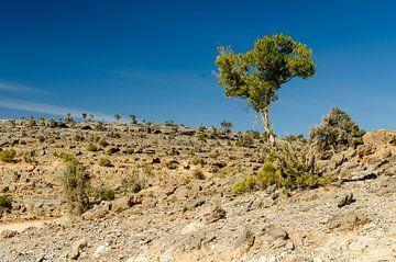 Oman - Djabal Sjams op de top van Jack Koning