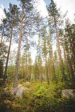 Bäume, die in der schwedischen Natur hoch und stolz stehen von Geke Woudstra