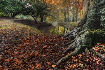 Herfst  in het bos van C mansveld