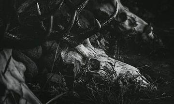 Crânes de cerfs couchés dans l'herbe - Crâne gris sur Jakob Baranowski - Off World Jack