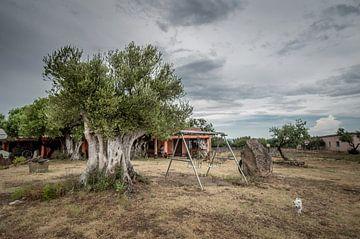Olive tree van Lex Scholten