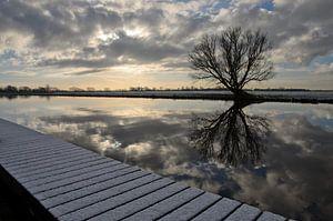 Winterse boom weerspiegeld