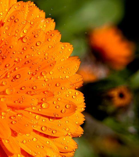 Orange Water Druppels Pt I van Alex Hiemstra
