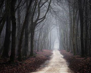 Het verboden bos van Tvurk Photography