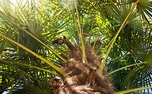 Palme im Sommer
