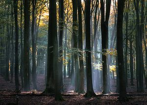 Lichtval door de bomen