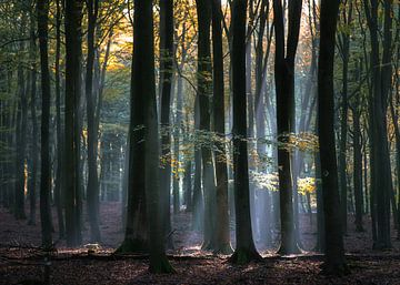 Waldlicht von Roelof Nijholt