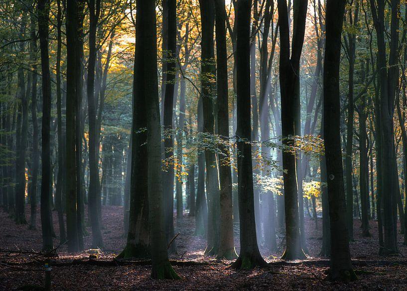 Lichtval door de bomen van Roelof Nijholt
