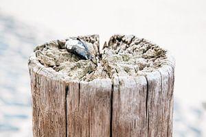 Paal met mossel met basalt zeewering van