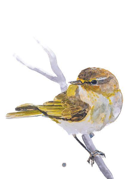 Der Zilpzalp Vogel Illustration von Angela Peters