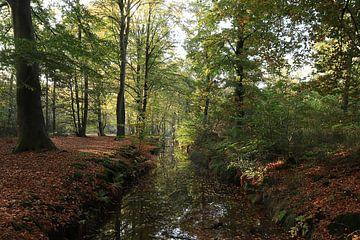 Herfst Rijsterbos Rijs Friesland van Fotografie Sybrandy