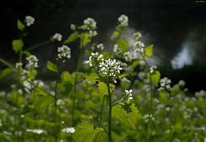 vergessene Blumen von Arash Mahdawi Nader