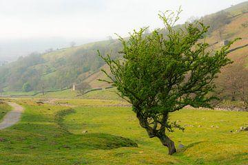 Frisgroene boom in de bergen van Silvia Rikmanspoel