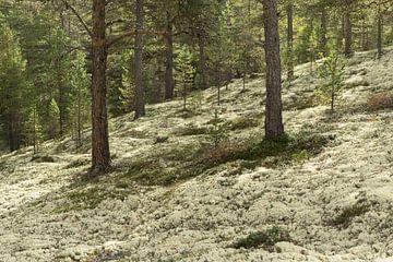 Een bos vol mos van Barbara Brolsma