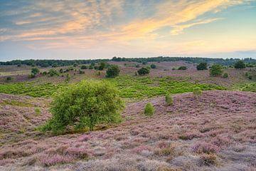 Sonnenuntergang in der Heide von Michael Valjak