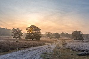 Brunsummerheide bei Sonnenaufgang
