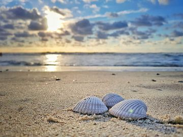 Beach shells  van Victor Droogh