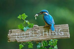 IJsvogel - No fishing!