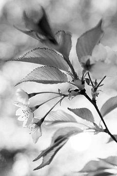 Frühlingsblüte in Schwarz und Weiß von Evelien Oerlemans