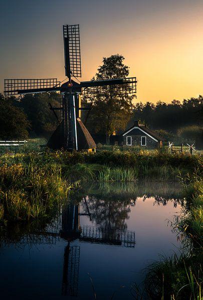 De wicher van Martijn van Steenbergen