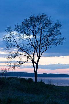 Baum am Meer in der Abendluft von Tot Kijk Fotografie: natuur aan de muur