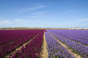 Hyacinten velden tot de horizon van Maurice de vries