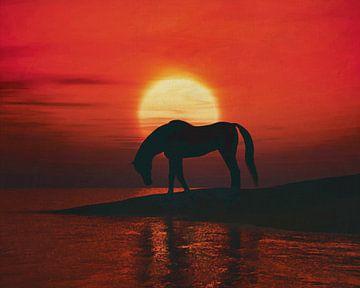 Paard drinkt bij zonsondergang