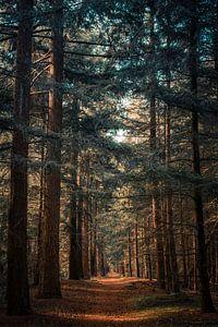 Pad in bos van