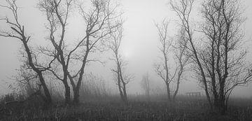 Bäume im Nebel von Thijs Friederich