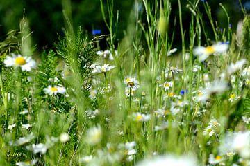 bloemenweide van Petra De Jonge