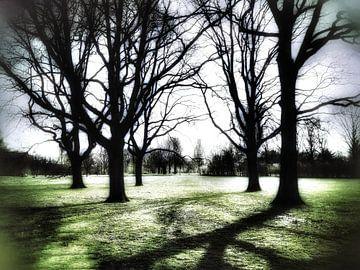 Bomen in de ochtend van Elo Mars