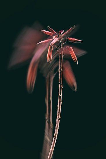 Flowers van Yvette Bauwens